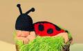 Newborn Lieveheersbeestje Set